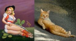 Cats that look like pinups (1)