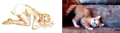 Cats that look like pinups (8)