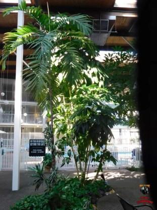 Cosawesome 4 hotel (4)