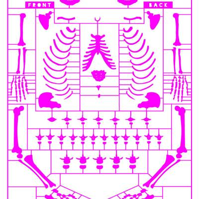 Anatomy of a politician – giclee pink