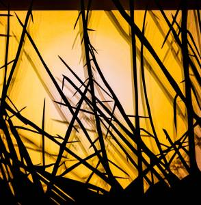 Sunset Grasses - detail2