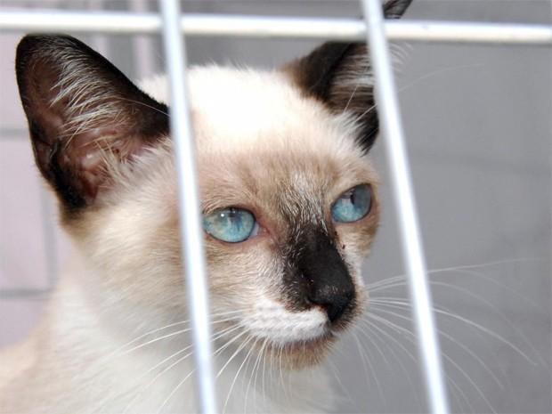 guia da adoção de gatos