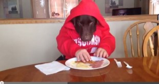 dog-eating-with-hands-videos