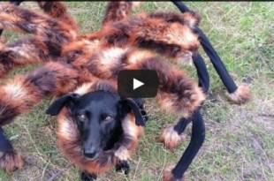 dog-giant-spider-costume-prank