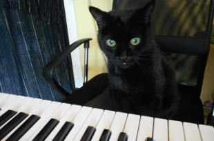 mojo the cat with piano