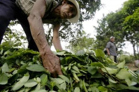 Coltivatore di cocaina. La produzione della coca è la principale fonte di guadagno di una parte dei contadini che vivono sugli altopiani.