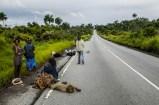 Alcune vittime di ebola su una strada ricavata dalla deforestazione.