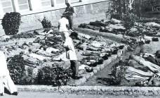 Bhopal, 7 dicembre 1984