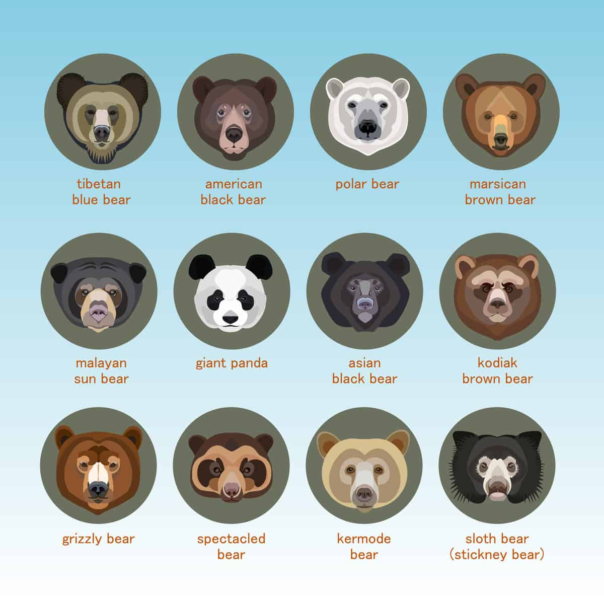 11 Types Of Bears From Around The World