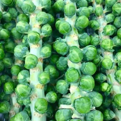 Brussel Sprouts Darkmar