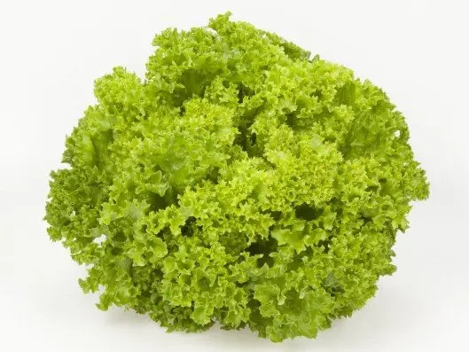 Lettuce Lolla Bionda