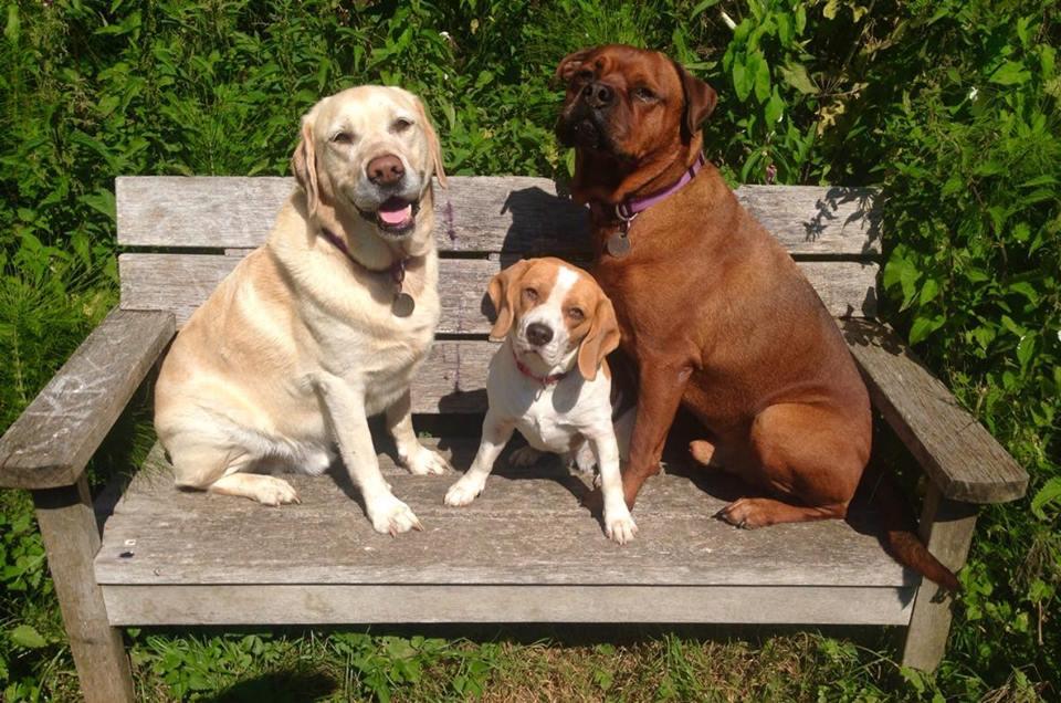 adventure dog days group