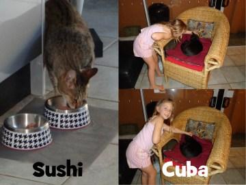 sushi&cuba