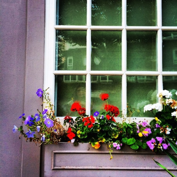 Flowers in the window outside The Cow on Westbourne Park Road