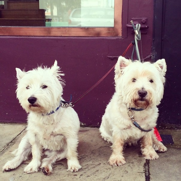 Pups in Notting Hill