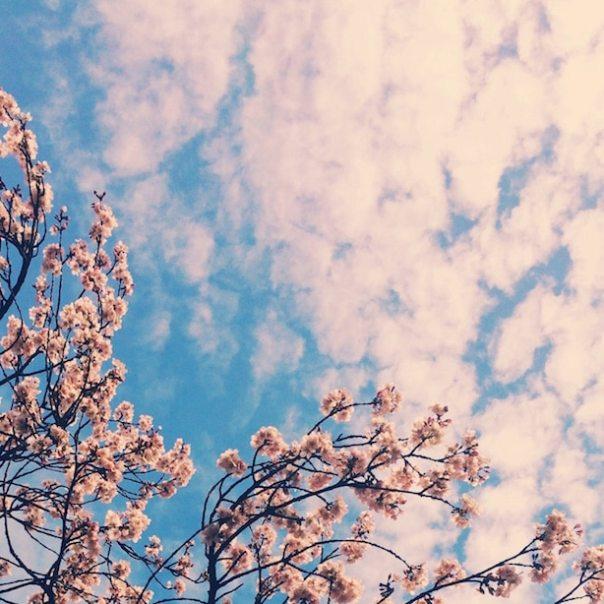 Blossom Watch - London