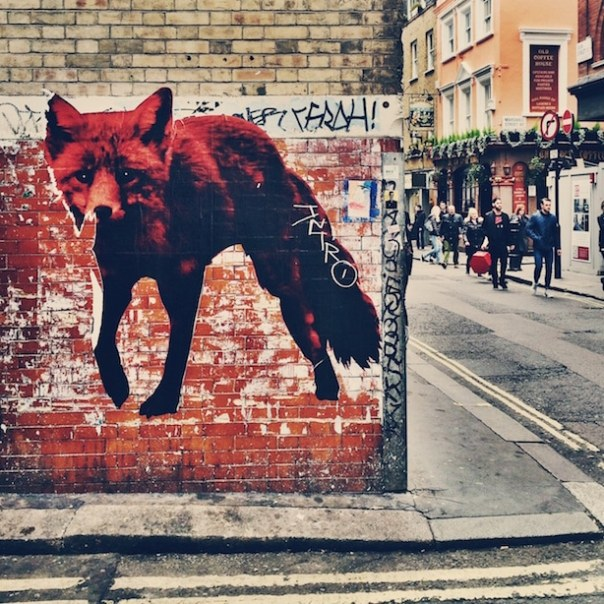 The Prodigy fox