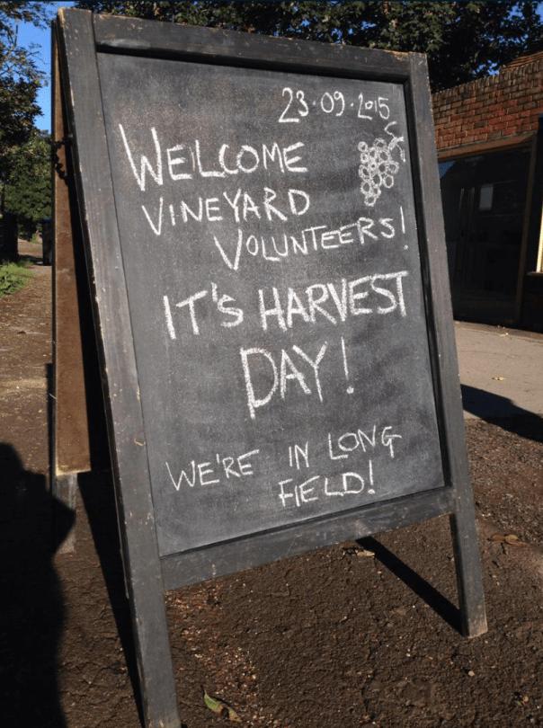 Forty Hall Vineyard