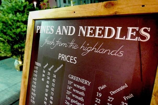 Poppy-Loves-Pines-Needles-13