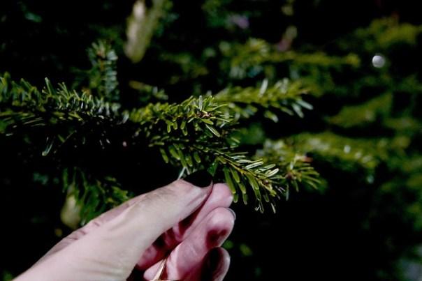 Poppy-Loves-Pines-Needles-2