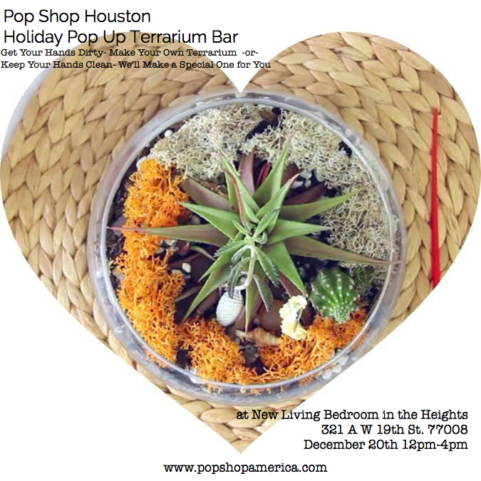 Succulent Terrariums and Glass Terrariums in Houston TX | Join Pop Shop Houston at our Terrarium Event at New Living Bedroom Organic Boutique in Houston Heights
