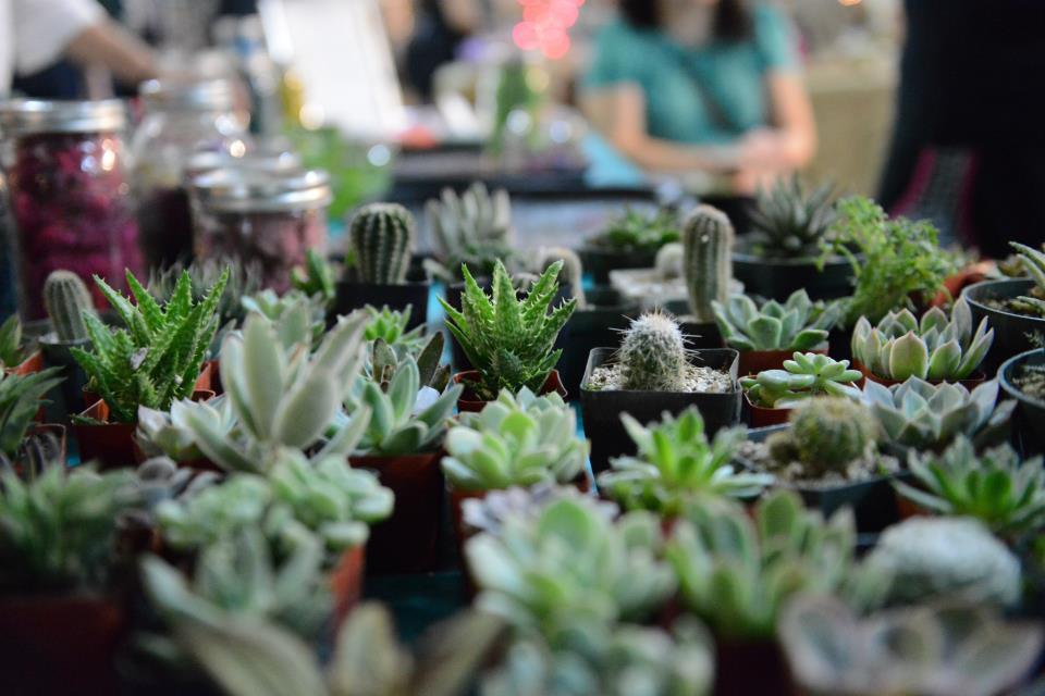 plants   Succulent Terrariums Glass Terrarium Bar by Pop Shop America