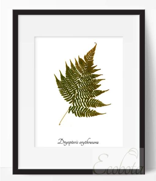 fern-botanical-print-pressed-fern-art-print