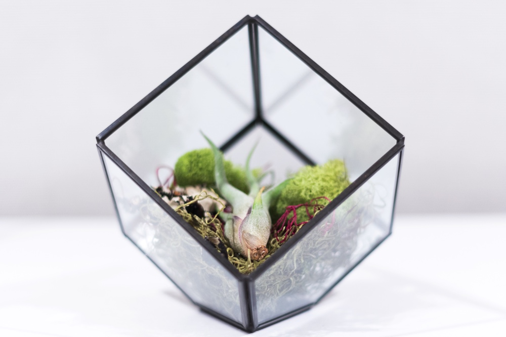 air plant terrarium care pop shop america