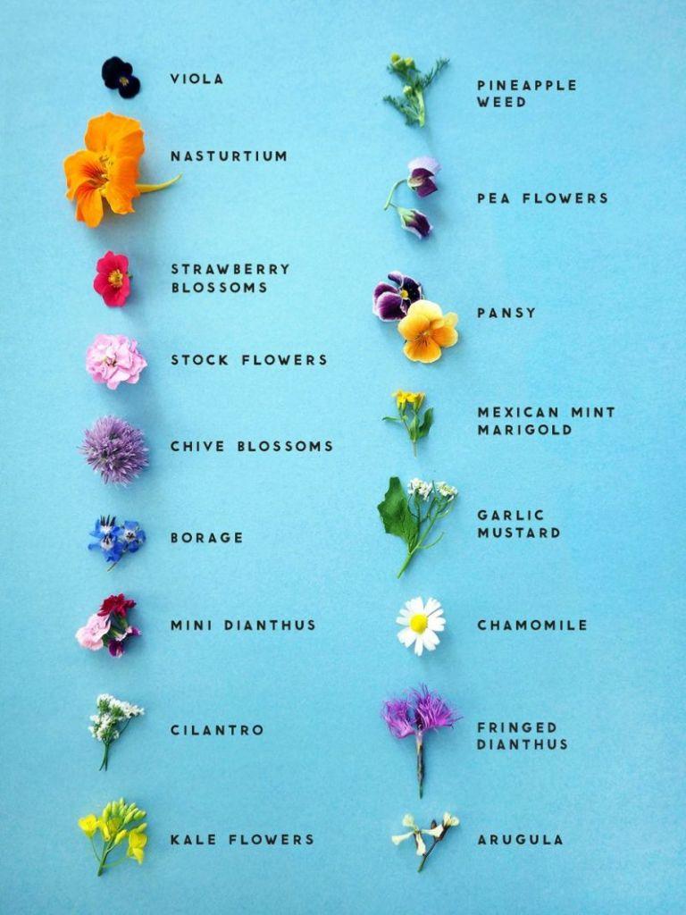 list of edible flowers pop shop america