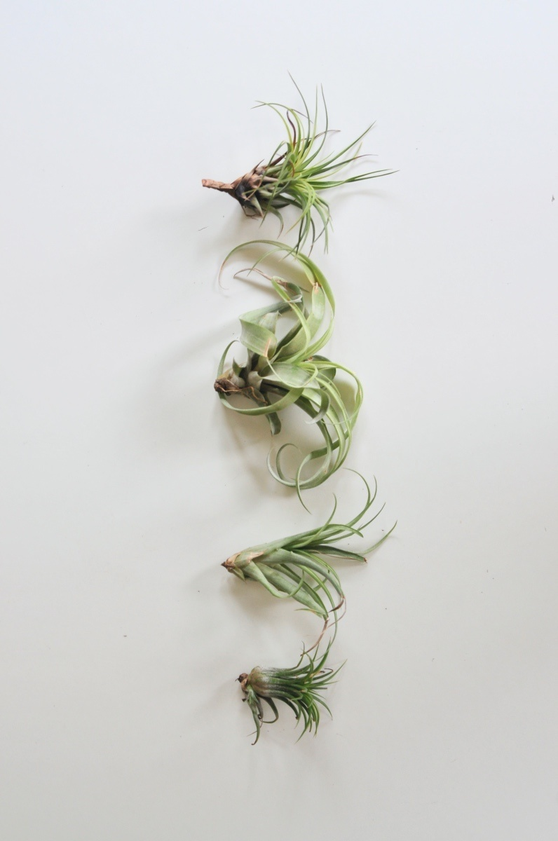 how-to-display-air-plants-indoors-pop-shop-america_craft in style box