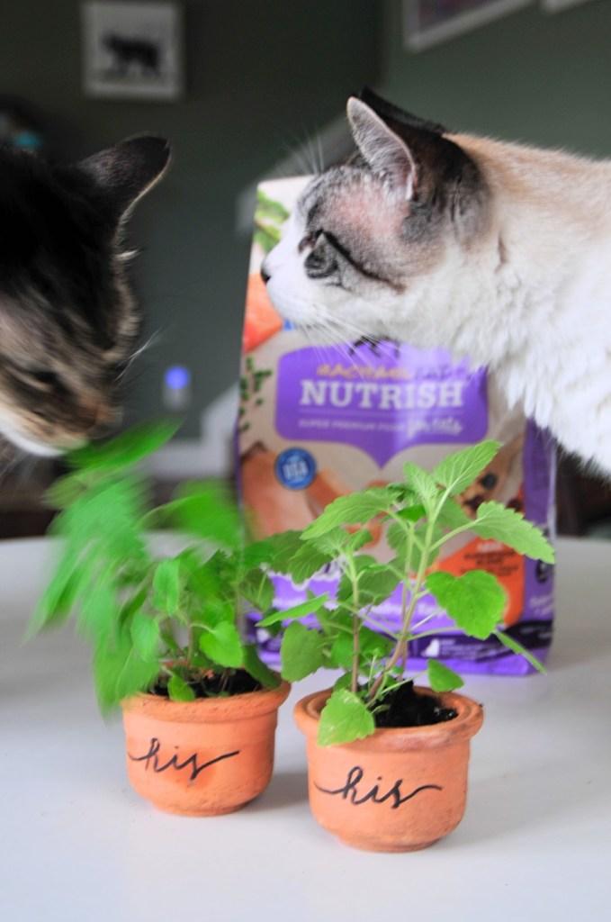 handsome-cobra-diy-hand-lettered-catnip-planters