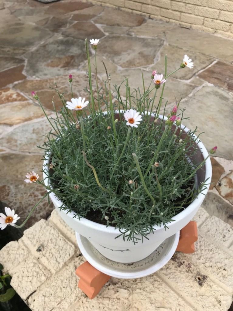 deadhead-flowers-how-to-garden-guide-pop-shop-america