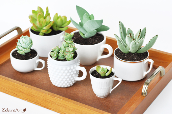 small-succulent-garden-teacups-craft