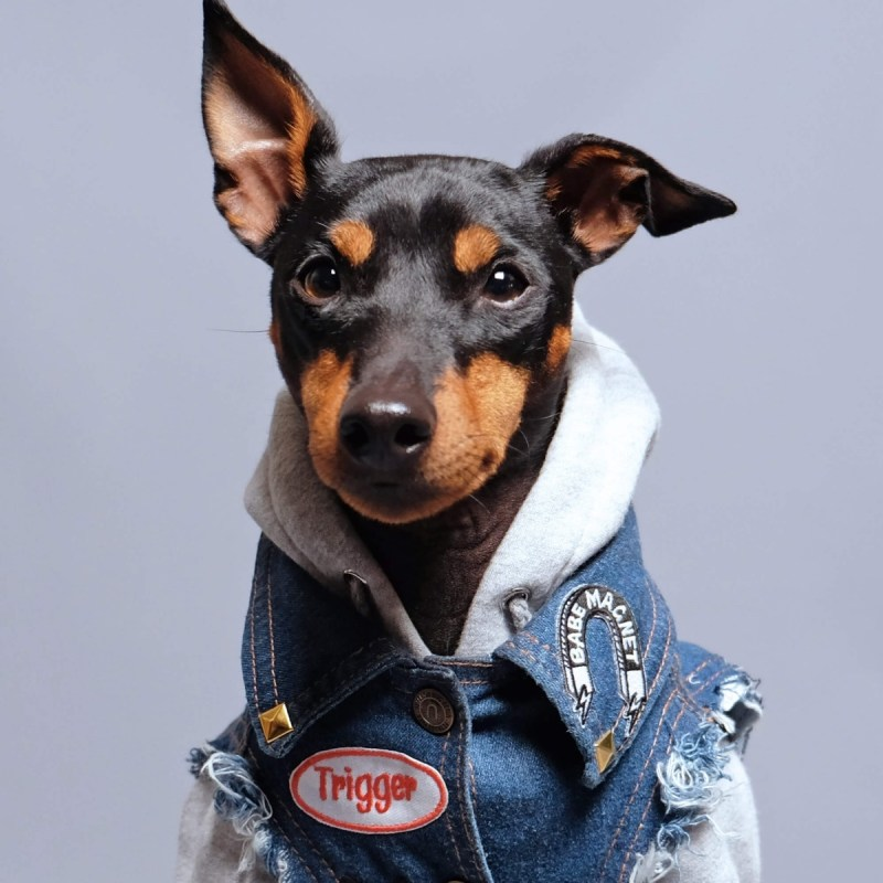 close up detail of pethaus australian dog clothes denim jacket