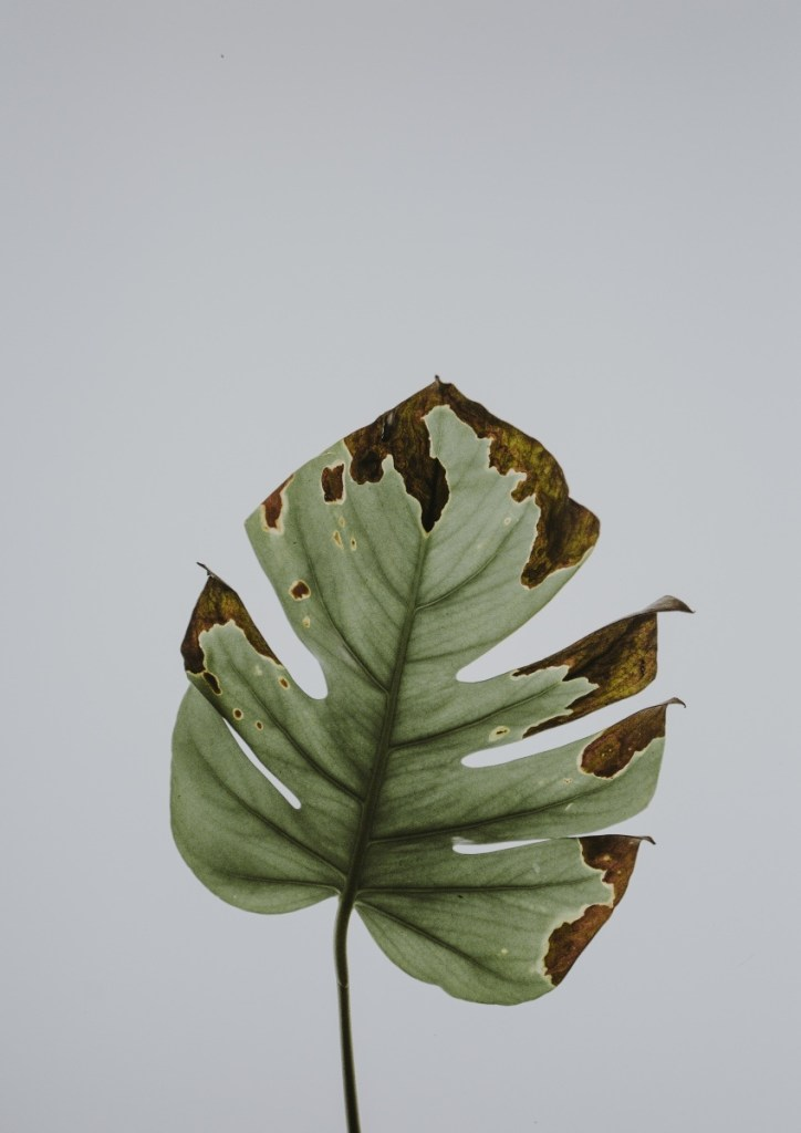 green mostera leaf printable art pop shop america