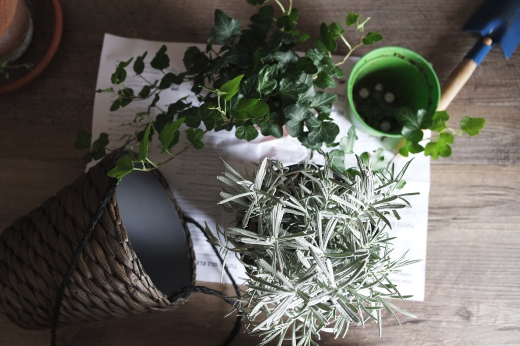 supplies to make diy fresh herb wine glass markers