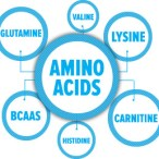 Best Amino Acids for Weight Loss