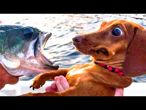 🤣 Funniest 🐶 Dogs and 😻 Cats – Awesome Funny Pet Animals Videos 😇