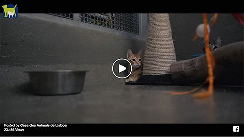 Casa dos Animais de Lisboa – Voluntariado