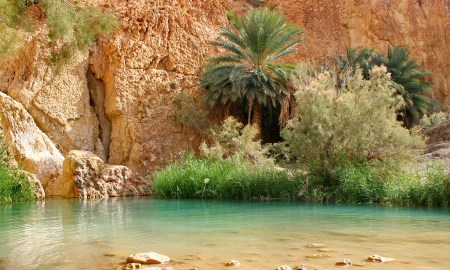 chebika-desert-oasis1