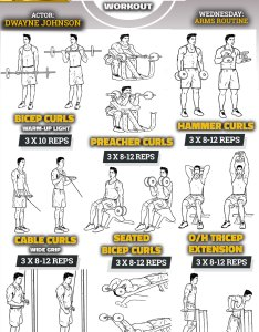 The rock arms workout routine how dwayne johnson gets huge massive biceps and also get   bicep tricep pop workouts rh popworkouts