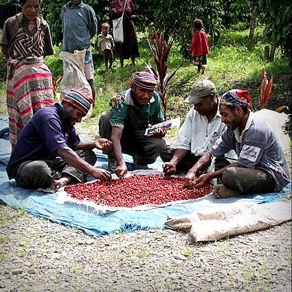 Men Sorting Red Cherries - Papua New Guinea Swiss Water Decaf Coffee