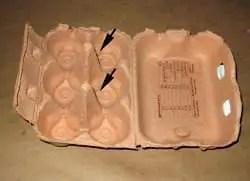 Flores-de-cartón-de-huevos-4