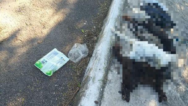 Denuncian envenenamiento de gatos en el poniente de Mérida | PorEsto