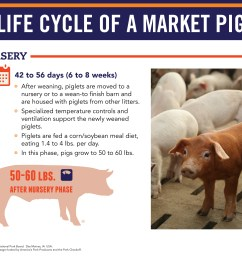 life cycle of a market pig nursery [ 3300 x 2700 Pixel ]