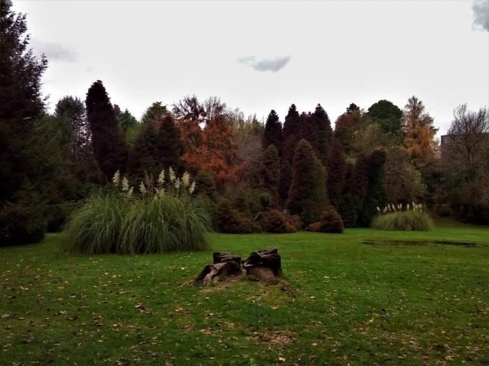 Fotografía del Jardín Botánico de la Universidad Austral de Valdivia.