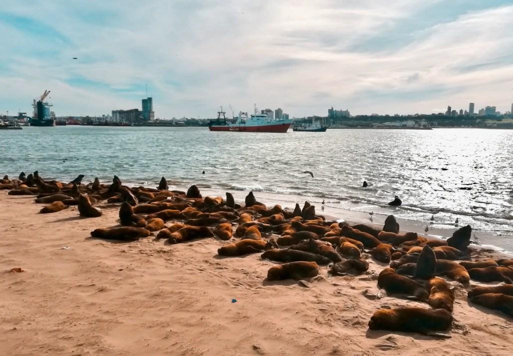 Lobos Marinos en Mar del Plata.