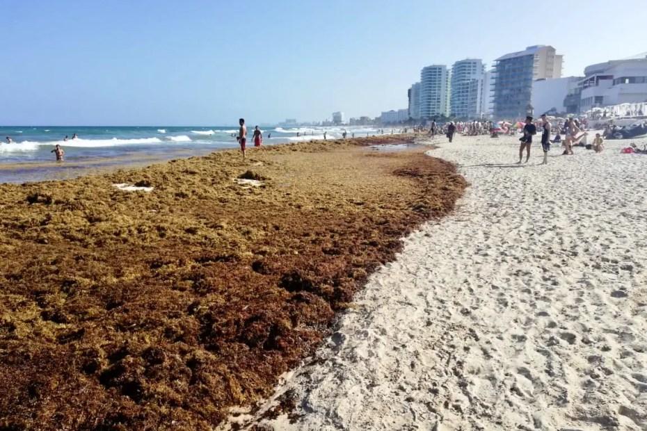 Playa de Cancún con sargazo.