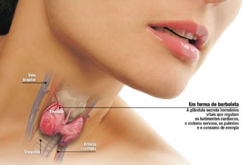 A tireoide é um órgão muito importante para o funcionamento do corpo. Ela possui 2 hormônios - T3 e T4 -responsáveis pelo funcionamento de vários outros órgãos. A tireoide está ligada a ciclo menstrual, fertilidade, raciocínio. Se ela estiver desregulada, pode causar aumento de peso.