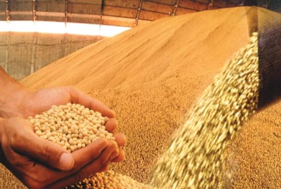 No mundo inteiro, a soja geneticamente modificada, a rainha das commodities, vai parar no estômago de animais que não estão nem aí se ele é transgênica ou não. O subproduto mais comum é o óleo, mas há ainda o leite de soja, o tofu e a proteína. No Brasil, onde a soja transgênica ocupa 1/3 das áreas cultivadas, foram liberadas cinco variantes, todas resistentes a herbicidas.